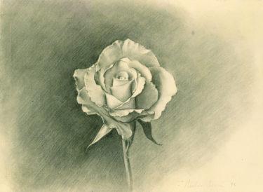 yellowrose-study03